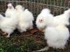 kyllinger-11-11-2013-2