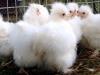 kyllinger-11-11-2013-5