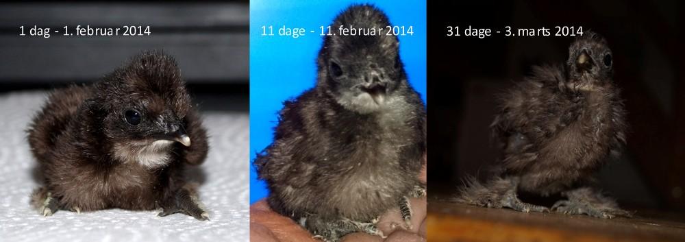 1-dag-11-dage-31-dage-03-03-2014-1